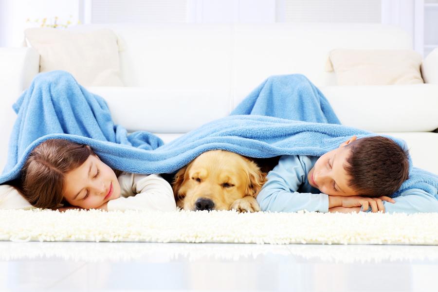 囧研究:为什么狗爱吃便,原因震惊到我了